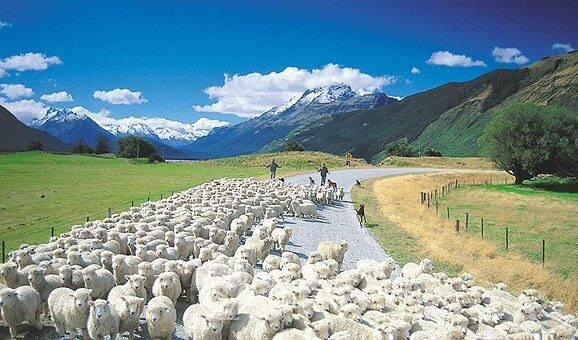 Lana de Nueva Zelanda